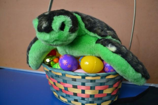 sea turtle egg hunt